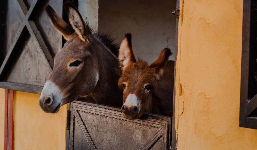 Mommy and baby Donkey in their stable