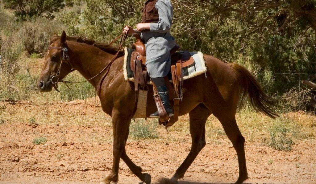 Tall Rider, Short Horse