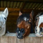 Five Cheapest Horse Breeds