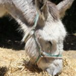 Can Donkeys Eat Cucumbers?