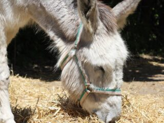 a donkey eating cucumber with hay
