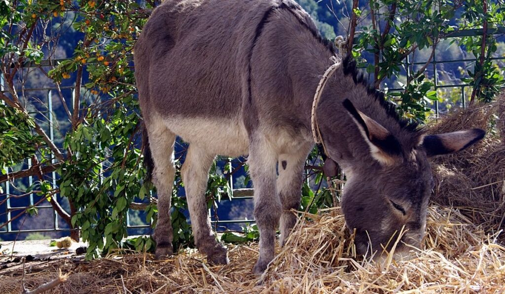 a donkey eating hay with some cucumbers