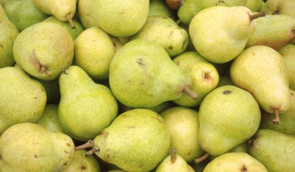 bulk of pears that a sheep can eat