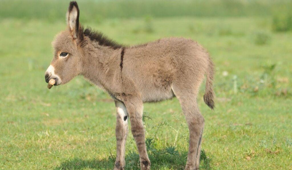 donkey in an open field