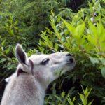 What Fruits Can Llamas Eat?