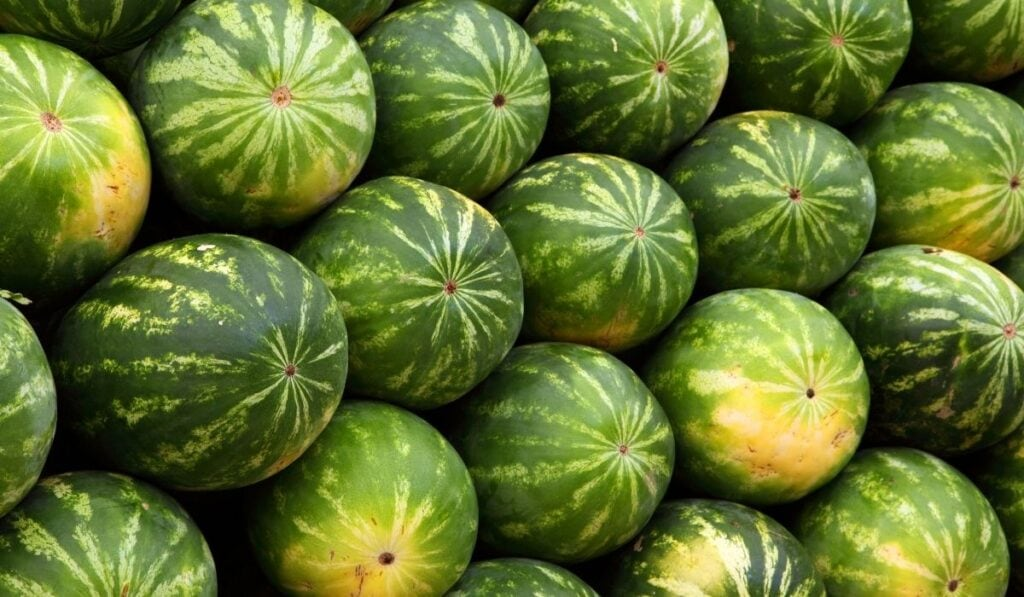 load of watermelons
