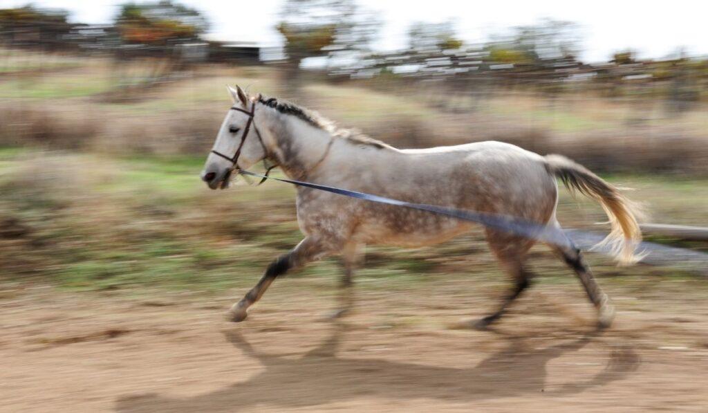 standardbred horse running