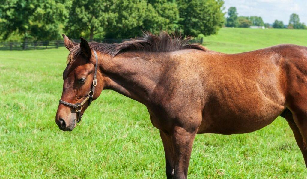 thoroughbred horse on a farm