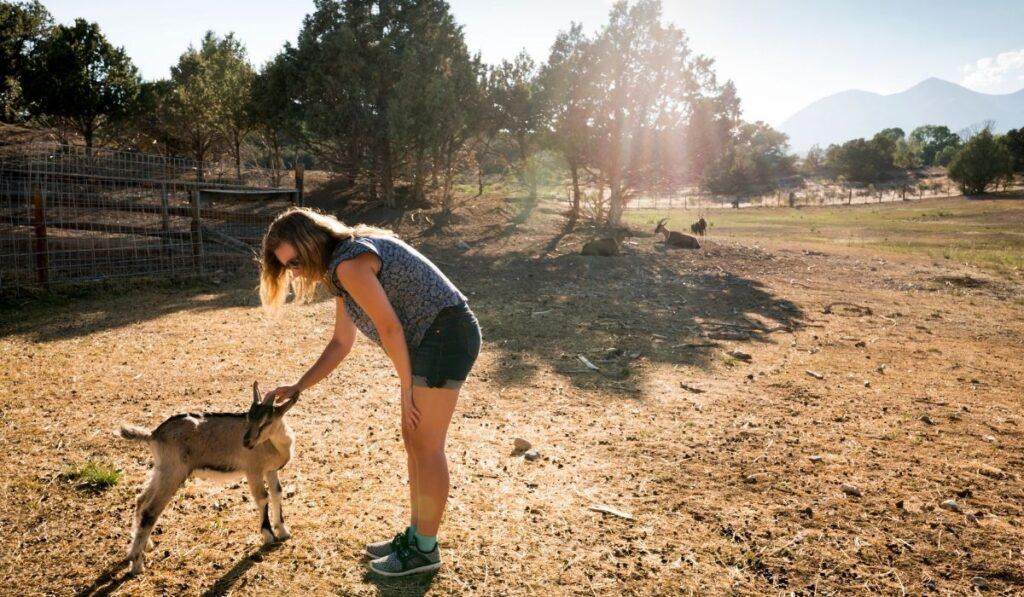Teaching Pet Goat New Tricks