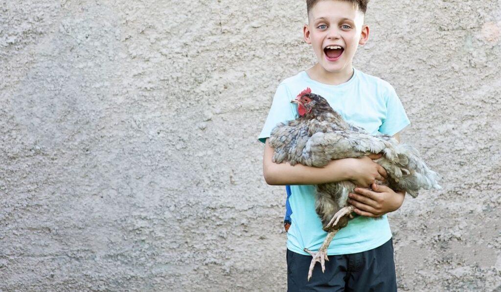 Faverolle Chicken