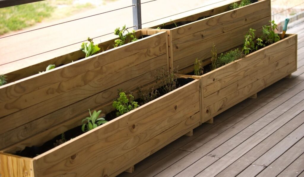planter boxes with vegetable plants