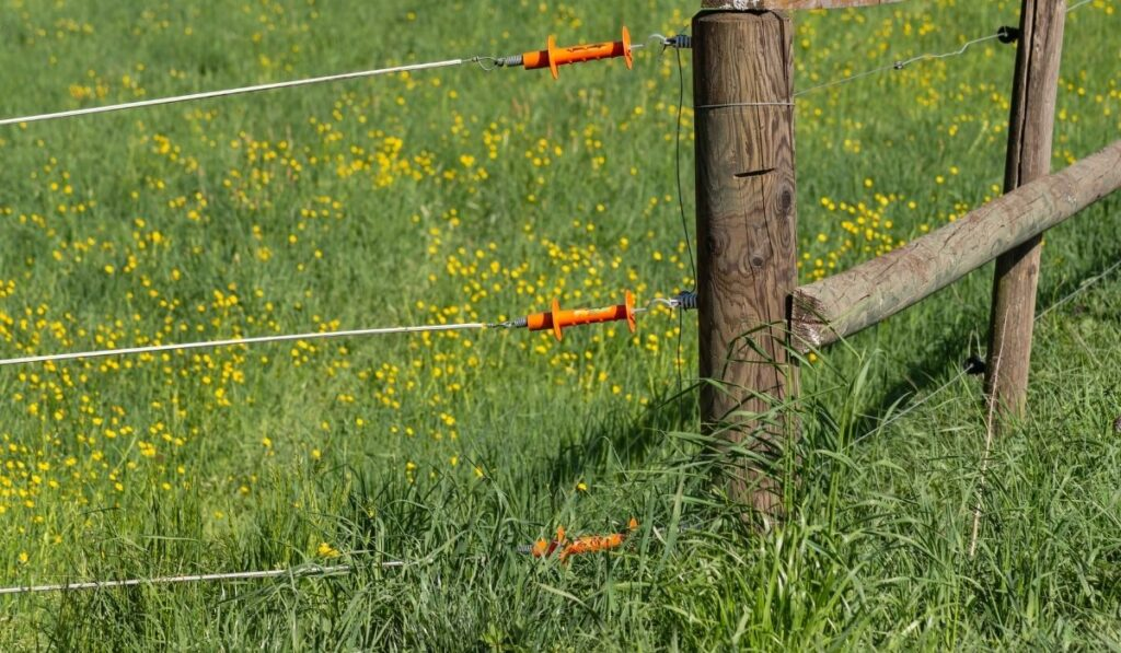 wooden pole and wires of electric fence for cattle