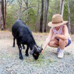 15 Black Goat Breeds