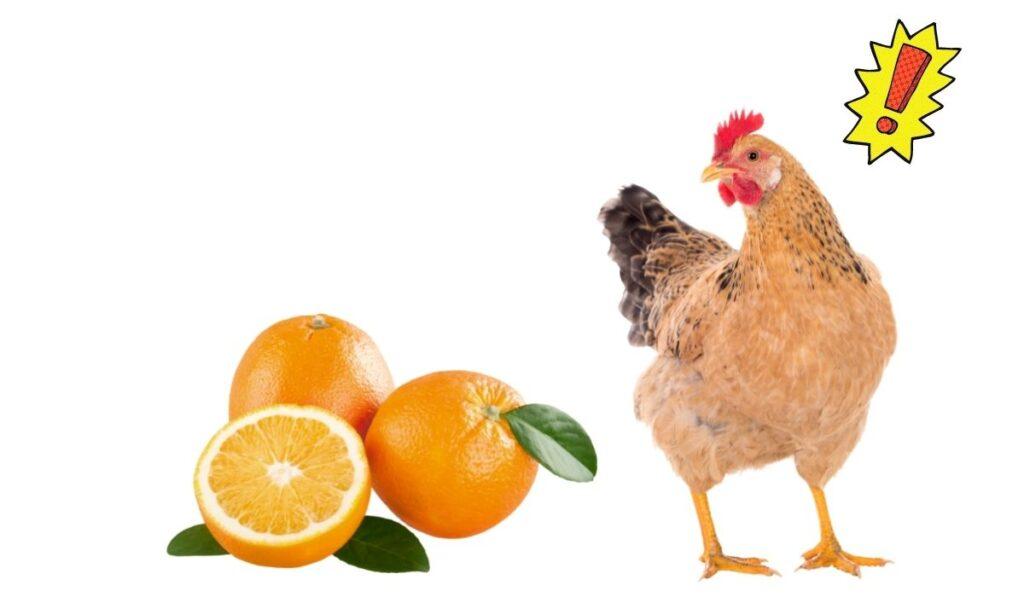 Chicken and Orange