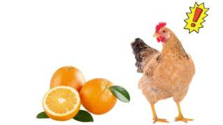 Chicken-and-Orange