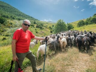 man hiking with goats