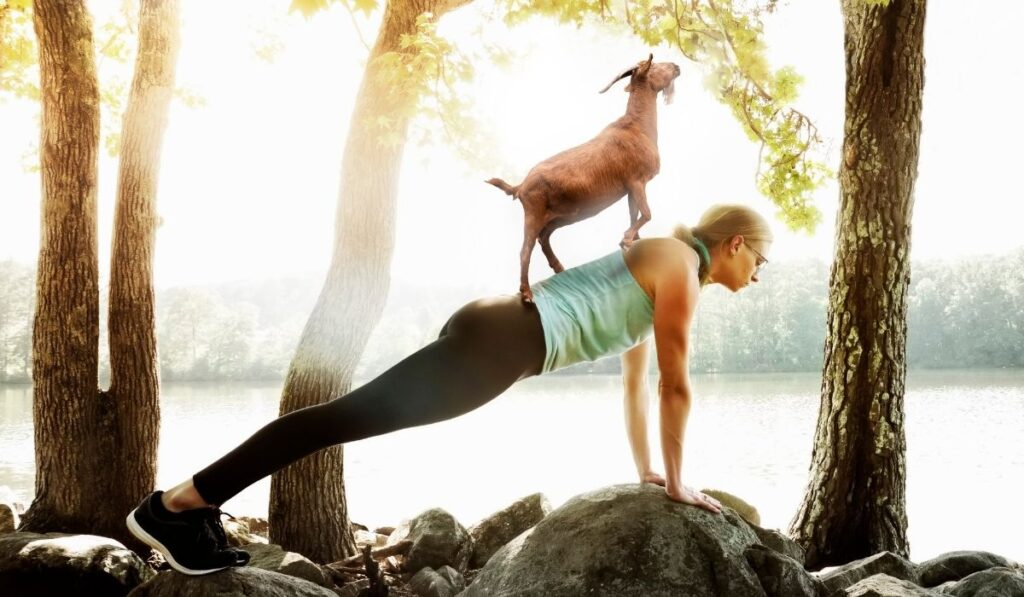 woman doing yoga while a goat on her back