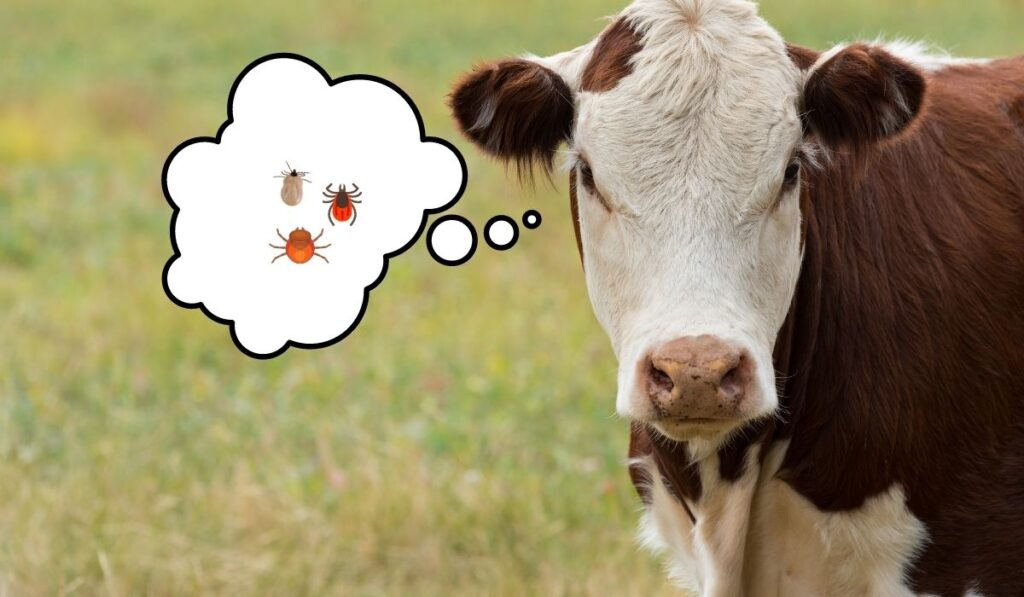 Cow's Thinking About Ticks and Other Parasites