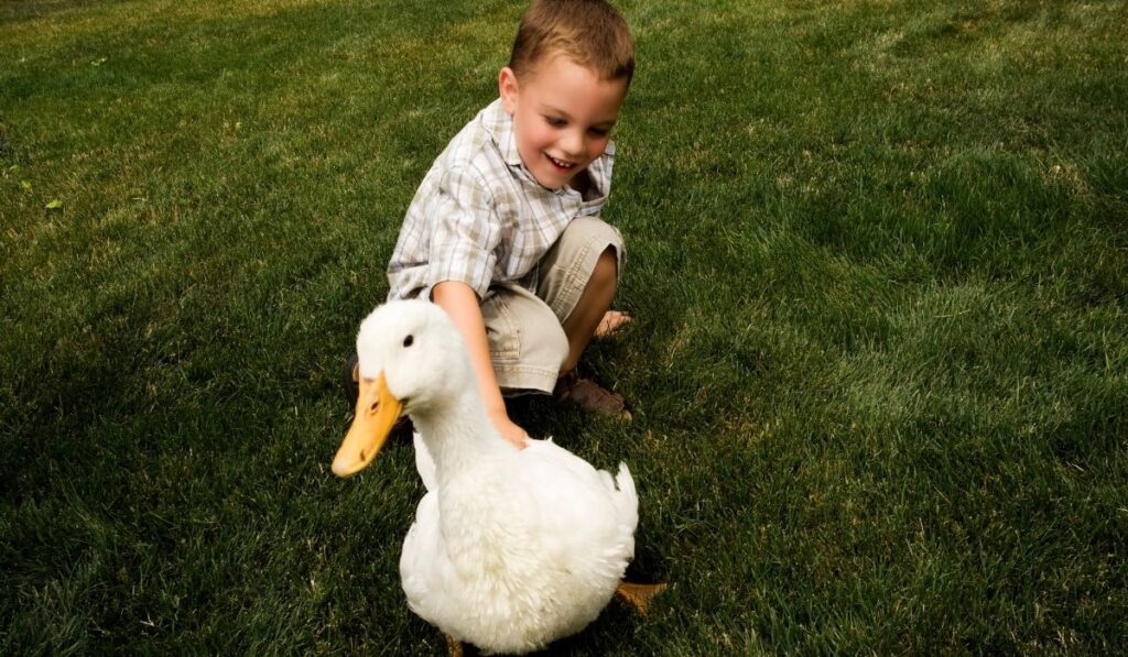 Duck and Little Boy