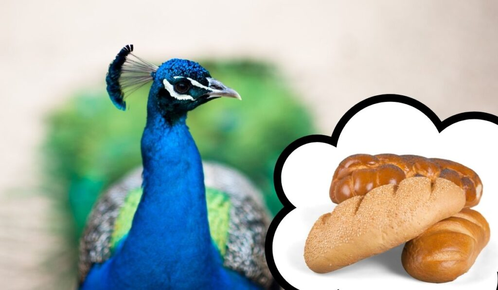 Peacocks-and-Bread