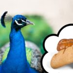 Can Peacocks Eat Bread?