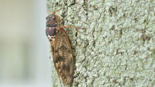 cicada on the wall