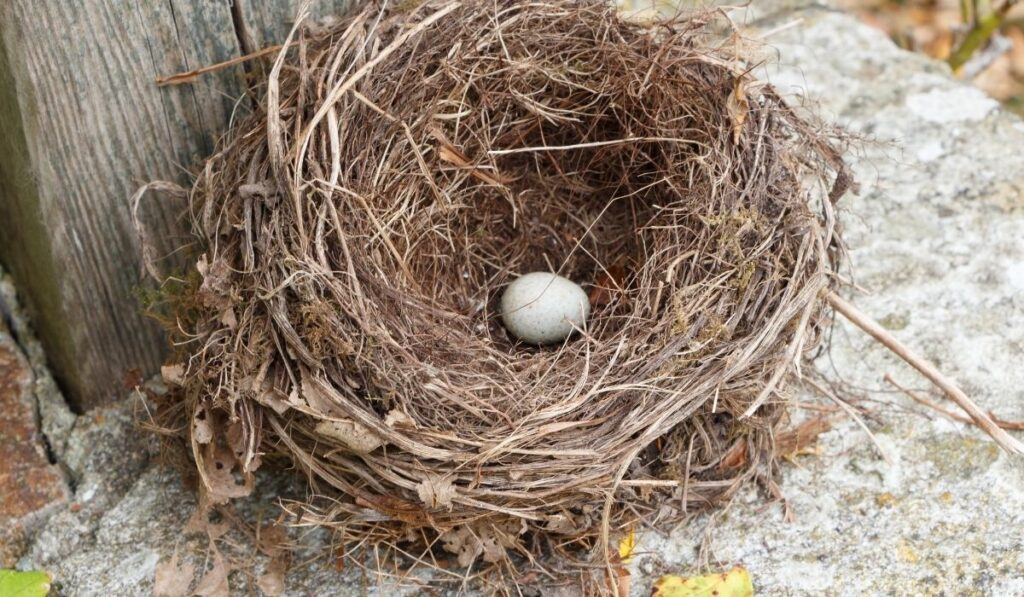 nest with 1 egg in the corner