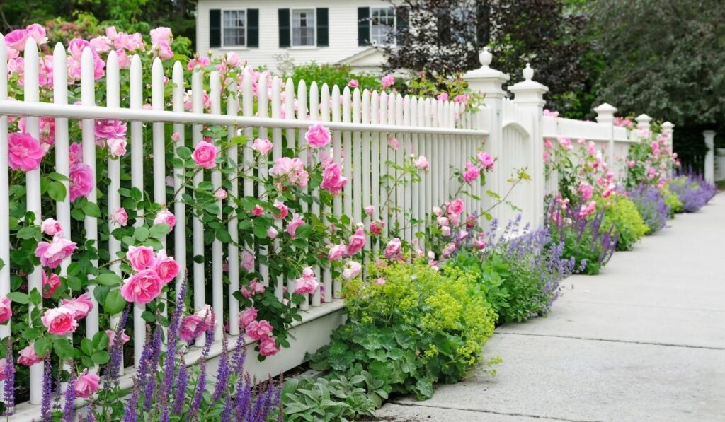 rose garden with fence