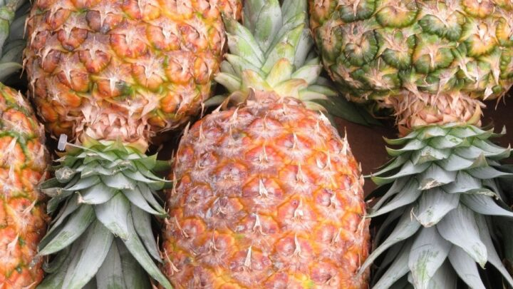 Ripe-Pineapple