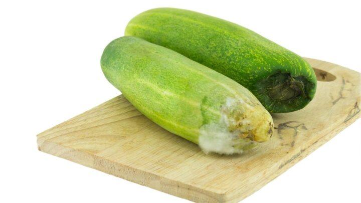 Rotten-Cucumber