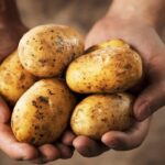 7 Ways to Tell If a Potato is Bad