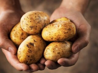 hands-holding-some-potatoes