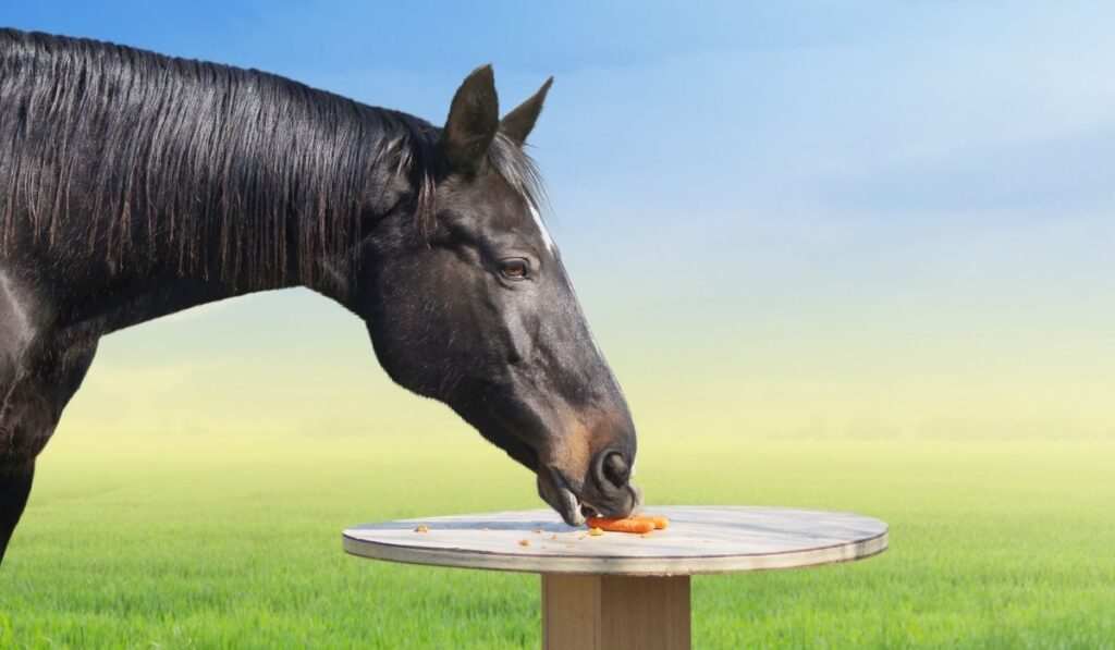 horse eating carrots on the table