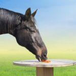 Can Horses Eat Carrots?