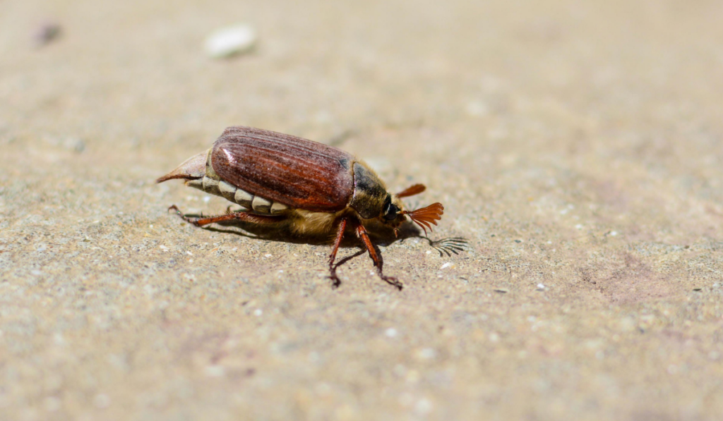 Bug on a ground