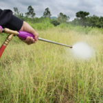 Does Diesel Kill Weeds? (9 Things You Should Know)