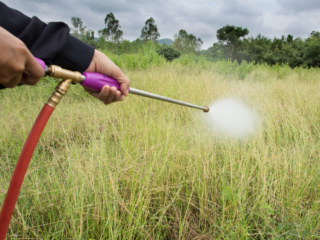 spray-weeds