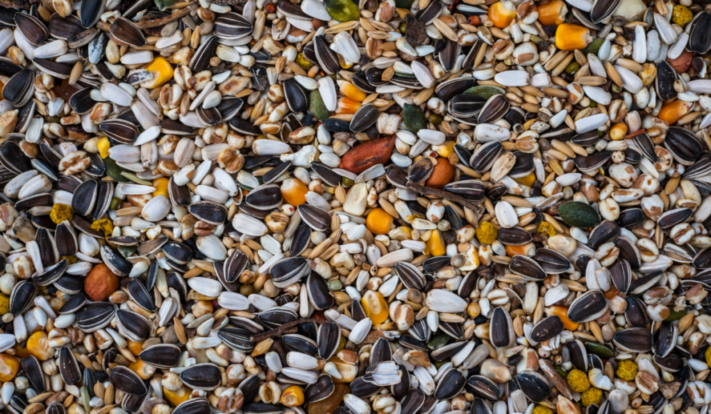 Various seed and grain in a close up photo.