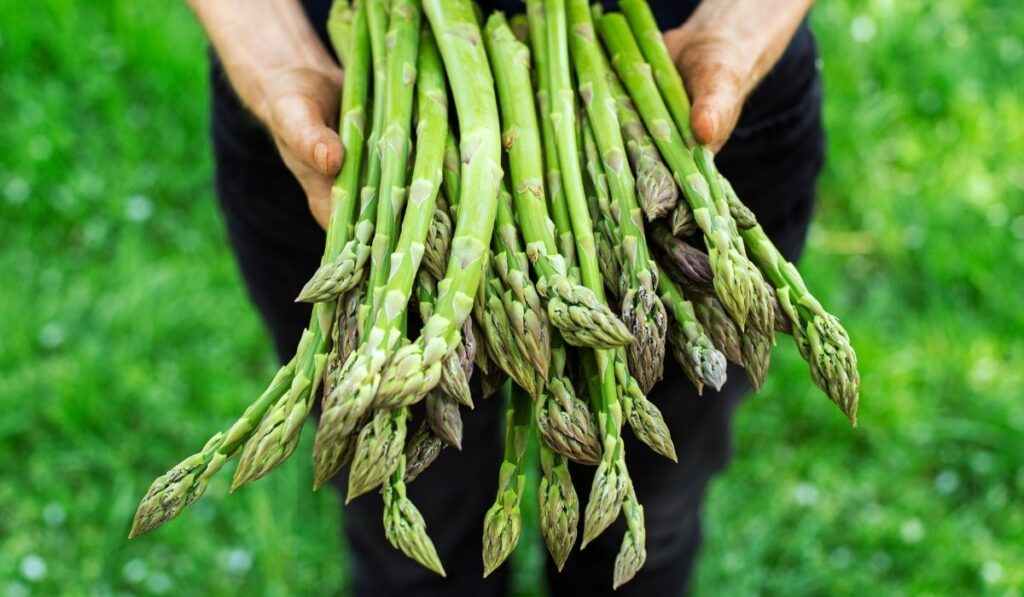 man holding a handful of asparagus