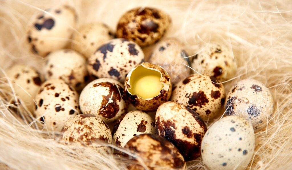 quail-eggs-in-the-nest