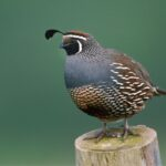 What Can Quail Not Eat? - 9 Items
