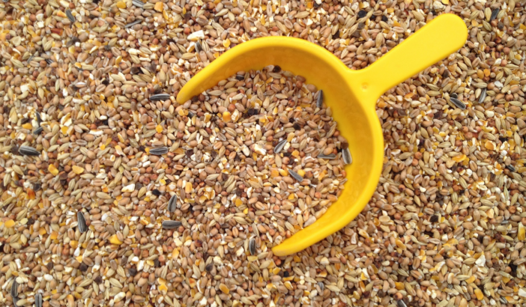 Feeds in a yellow scoop.