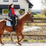 Ultimate Guide To Raising Horses