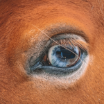 9 Reasons Your Horse Has White Eyes