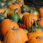 What to Do with Unripe Pumpkin – 5 Ideas